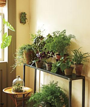szobanövények, légtisztító növények