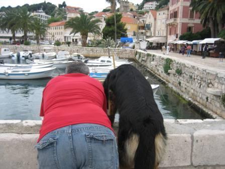 nyaralás kutyával, kutyák és a nyaralás